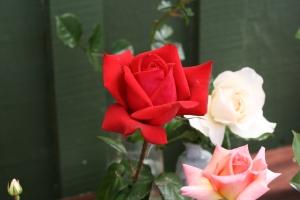 Red velvet rose - best scent
